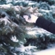 the Snow Slowly Falls From the Tree in the Winter Forest, It's Cold, the Girl Touches the Snow - VideoHive Item for Sale