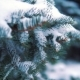 Snow Slowly Falls on the Trees in the Winter Park - VideoHive Item for Sale