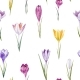 Watercolor Crocus Floral Pattern - GraphicRiver Item for Sale