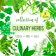 Popular Herbs - GraphicRiver Item for Sale