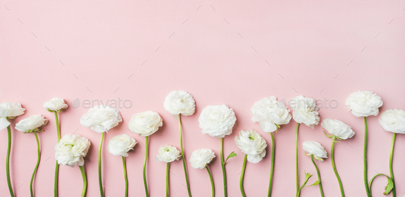 Saint Valentines Day background with ranunculus flowers, light pink background - Stock Photo - Images