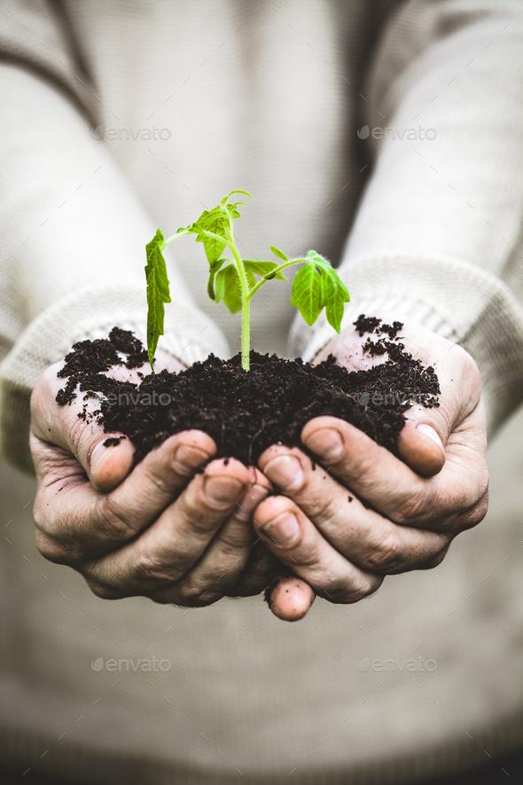 Gardener - Stock Photo - Images