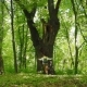 Girl Hugs the Big Tree in the Forest - VideoHive Item for Sale