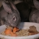 Group of Rabbits Eating Food in the Farm. - VideoHive Item for Sale