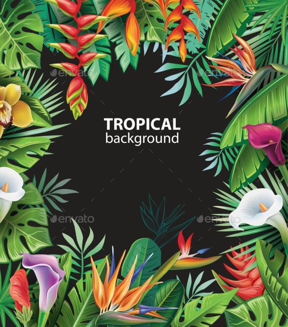 Background with Tropical Plants - Flowers & Plants Nature