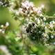Bumblebee gathering pollen - PhotoDune Item for Sale