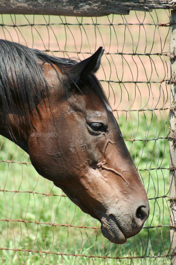 Horse Portrait - Stock Photo - Images