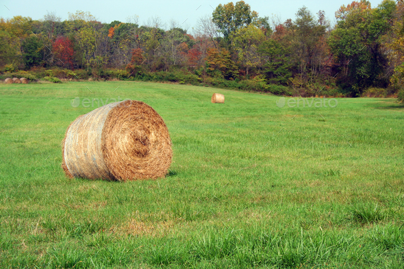 Hay Rolls in a green field - Stock Photo - Images