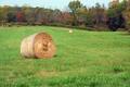 Hay Rolls in a green field - PhotoDune Item for Sale