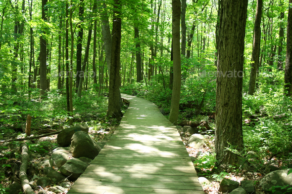 Bridge in woods - Stock Photo - Images