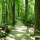 Bridge in woods - PhotoDune Item for Sale