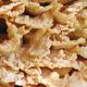 Tree fungus - PhotoDune Item for Sale