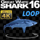 Shark 16 Swims in a Circle - VideoHive Item for Sale