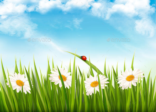 Nature Background With Green Grass Flowers and Butterfly - Seasons Nature