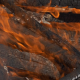 Forest Brush Fire Burning - VideoHive Item for Sale