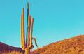 Cactus - PhotoDune Item for Sale