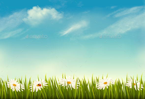 Spring Nature Background With Green Grass And Sky - Flowers & Plants Nature