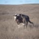 Pair of Horses Play in the Pasture - VideoHive Item for Sale