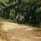 Two Asian Elephants in the Shade of the Jungle - VideoHive Item for Sale