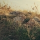 Vintage Looking Footage of Dry Grass On Sea Coast - VideoHive Item for Sale