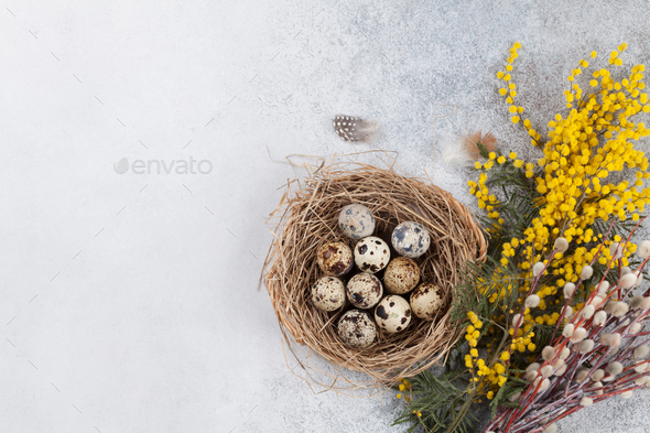 Quails eggs in nest and yellow flowers. Easter greeting card - Stock Photo - Images
