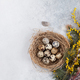 Quails eggs in nest and yellow flowers. Easter greeting card - PhotoDune Item for Sale