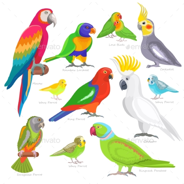Tropical Birds - Animals Characters