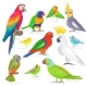 Tropical Birds - GraphicRiver Item for Sale
