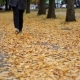Woman Legs Walking on Fallen Leaves in Autumn Park - VideoHive Item for Sale