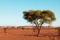 Sahara desert - PhotoDune Item for Sale