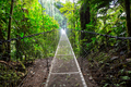 Bridge in Costa Rica - PhotoDune Item for Sale