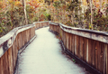 Boardwalk in Everglades - PhotoDune Item for Sale