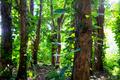 Jungle - PhotoDune Item for Sale