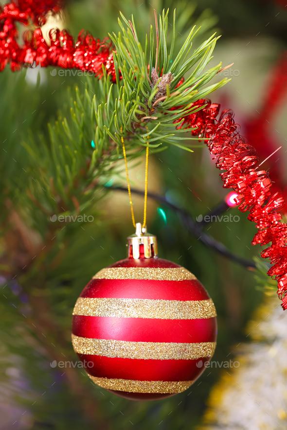 Red Christmas ball hanging on Christmas tree - Stock Photo - Images