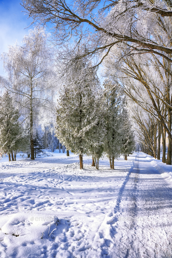 Snow-covered trees in the city park - Stock Photo - Images
