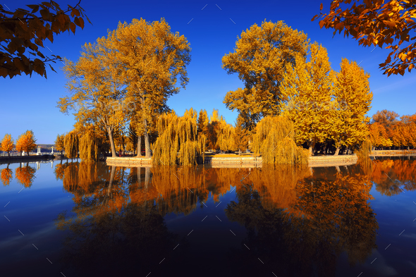 beautiful autumn park at sunny weather - Stock Photo - Images