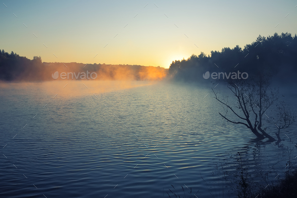 Lonely tree growing in a pond at sunrise - Stock Photo - Images