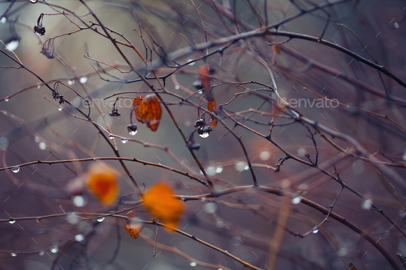 abstract and blurred background with branches and raindrops - Stock Photo - Images