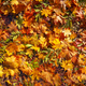 Colorful background of fallen autumn leaves - PhotoDune Item for Sale