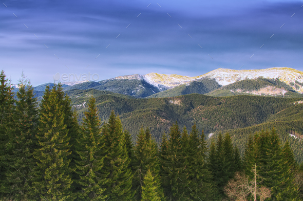 Spring mountain landscape with snowcapped montaines and fir fore - Stock Photo - Images