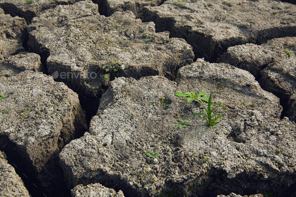 soil and grass during drought cracks in the land of drought - Stock Photo - Images