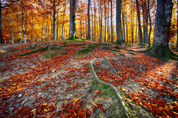 Autumn forest in the mountains - Stock Photo - Images