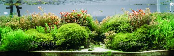 Aquarium algae, elements of flora in fishbowl - Stock Photo - Images