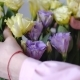 Female Hands with Beautiful Flowers - Eustoms of Yellow and Violet From Close Range - VideoHive Item for Sale