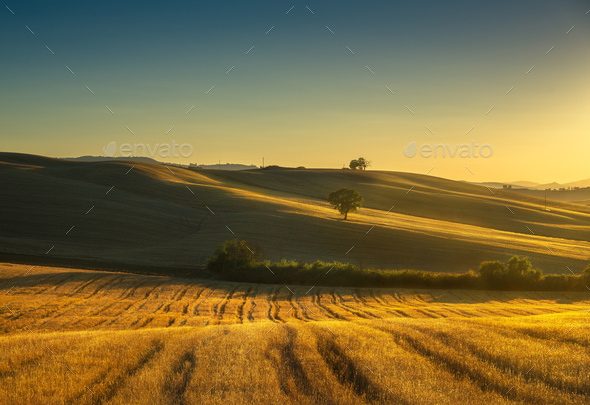 Tuscany countryside panorama, fields and trees on sunset. Italy - Stock Photo - Images