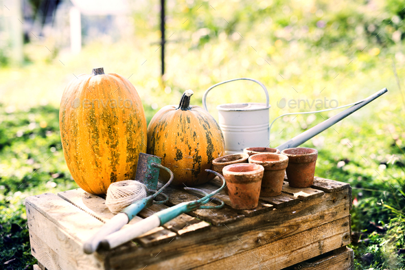 Composition of vegetables, garden tools and flower pots in the garden. - Stock Photo - Images