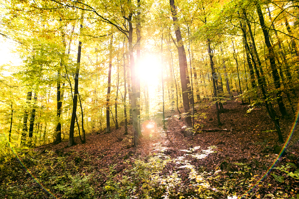 Autumn forest in an early morning. - Stock Photo - Images
