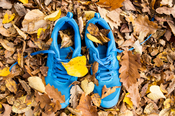 Blue trainers on colorful leaves on the ground. - Stock Photo - Images