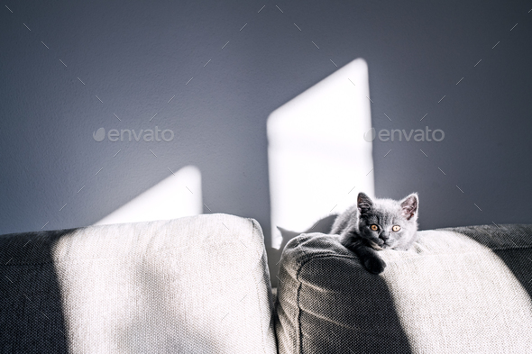 A small kitten sitting on a sofa. - Stock Photo - Images