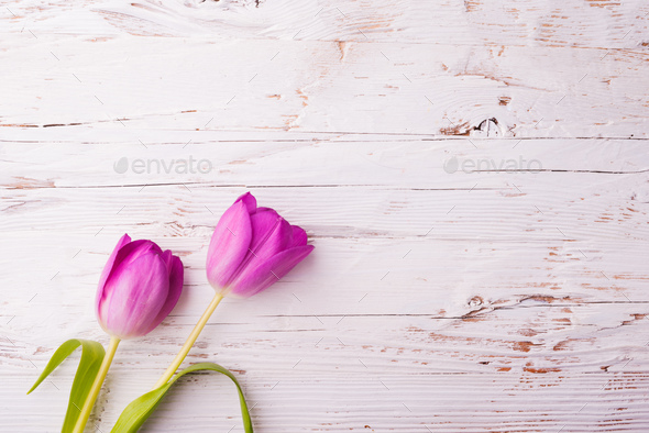 Easter and spring flat lay on a white wooden background. - Stock Photo - Images